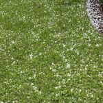 Leading Florida Restoration Company Provides Massive Repairs After Buckets of Hail Rain on Central and Southeast Florida